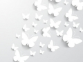 paper-butterfly-silhouette-pack_72147488647.jpg